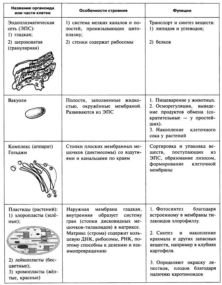 2.1. Клетка, гены, хромосомы, вирусы (Панина)